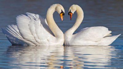 معرفة الجمال، بين تطوير القلب وتفتيح العقل